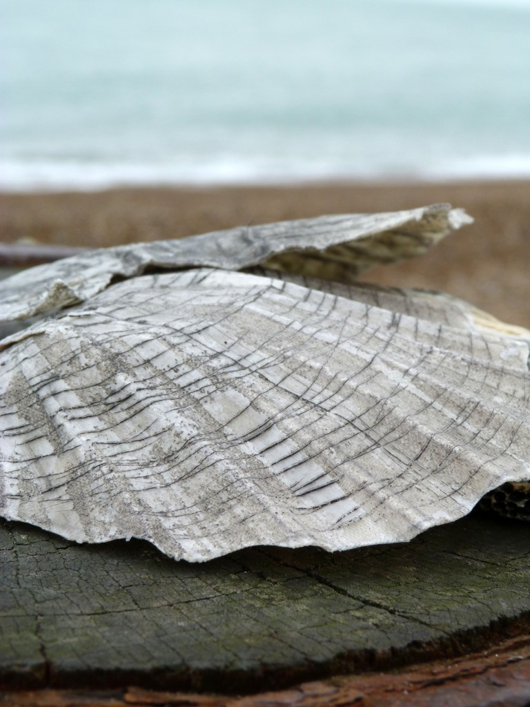 Work made by a student on the Sculptural Forms workshop and photographed on the beach.